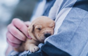 The Benefits of Pet Insurance